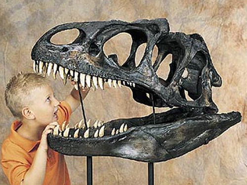 Dinosaurs, Fossils, and Archaeology