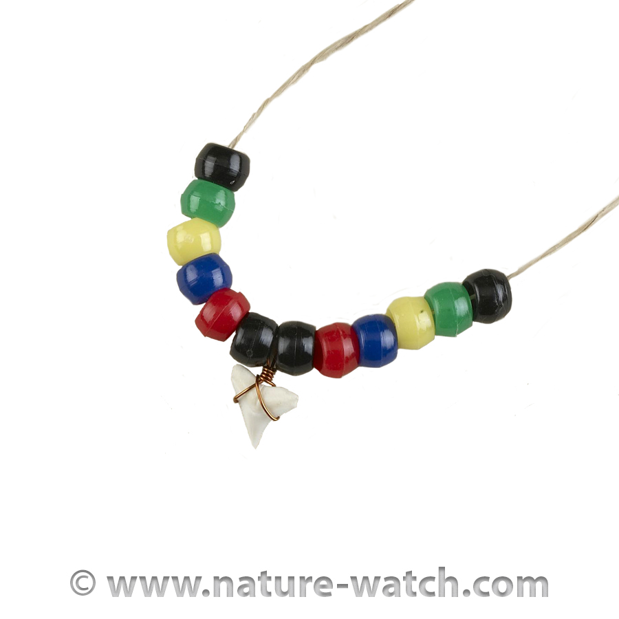 Shark Tooth Necklace Activity Kit