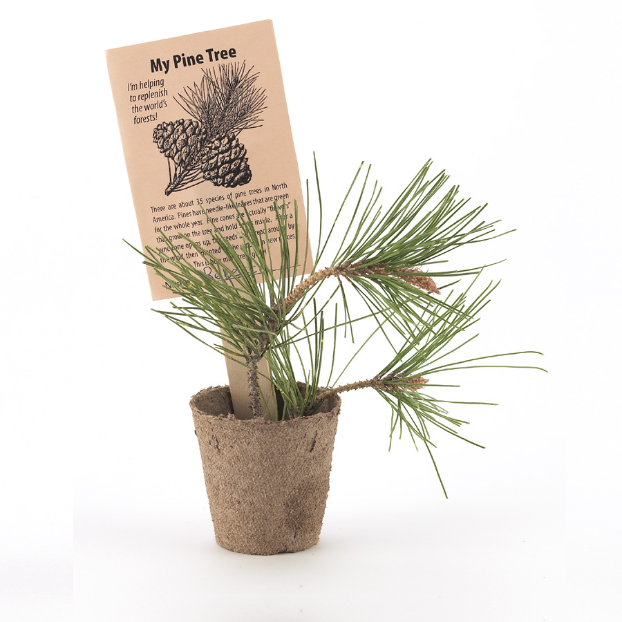Tree ring dating lab activity kit