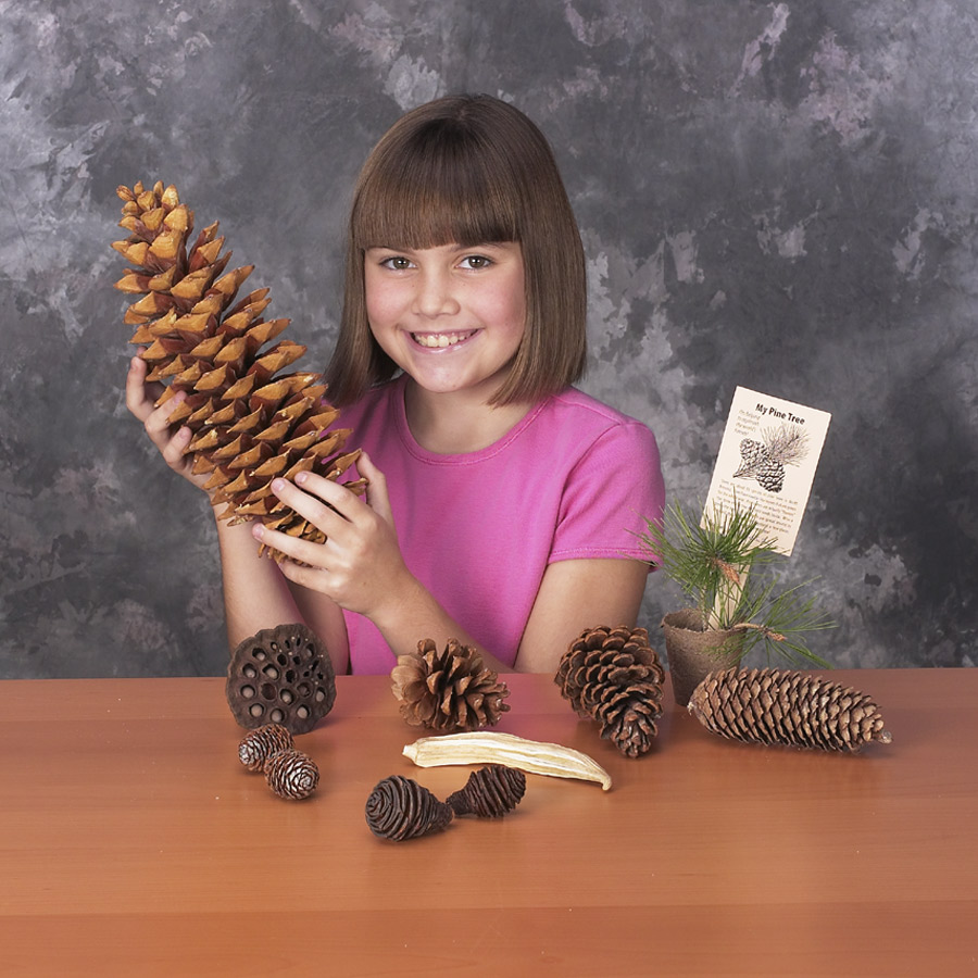 Forests Forever Activity Kit