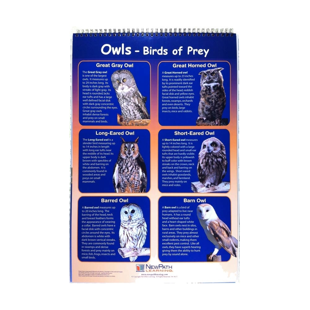 Owl+Pellet+Lab+Questions ... Owl Pellet Dissection Science Curriculum ...