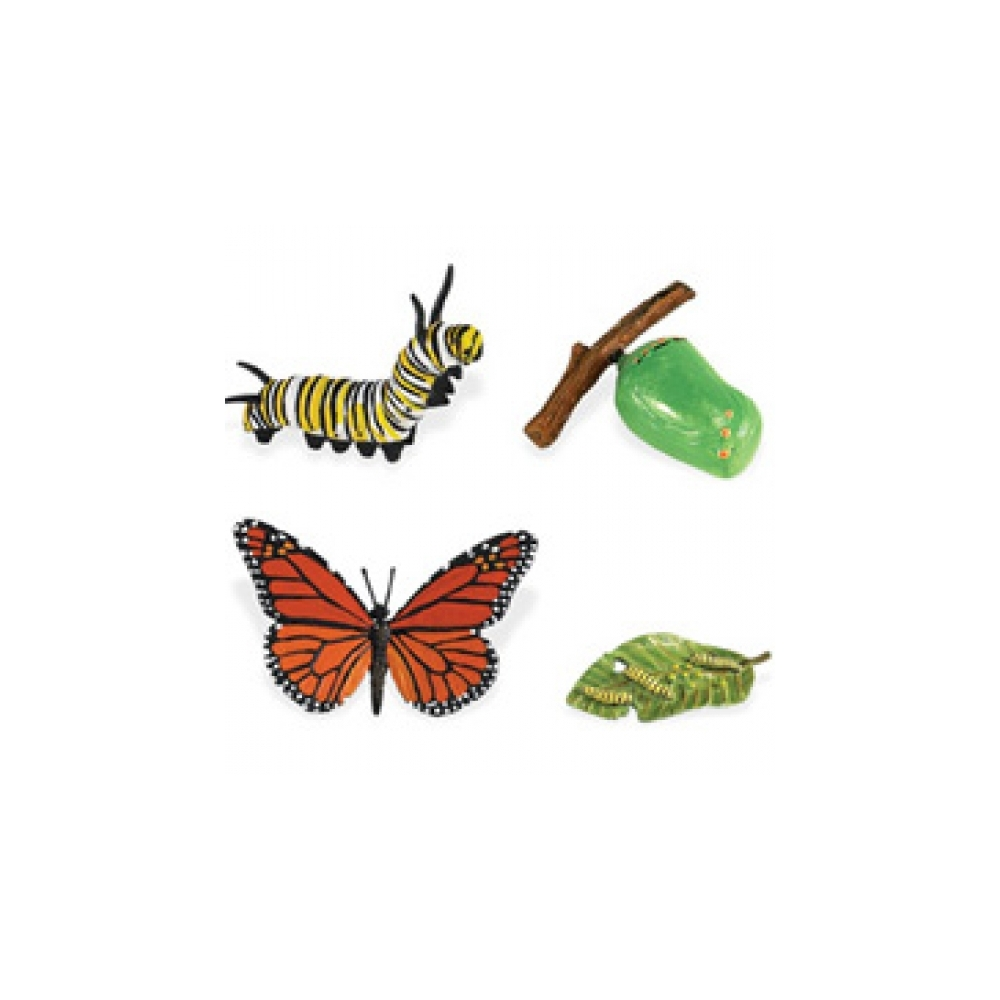 Monarch Butterfly Life Cycle Stage Figures: Butterfly Life ...