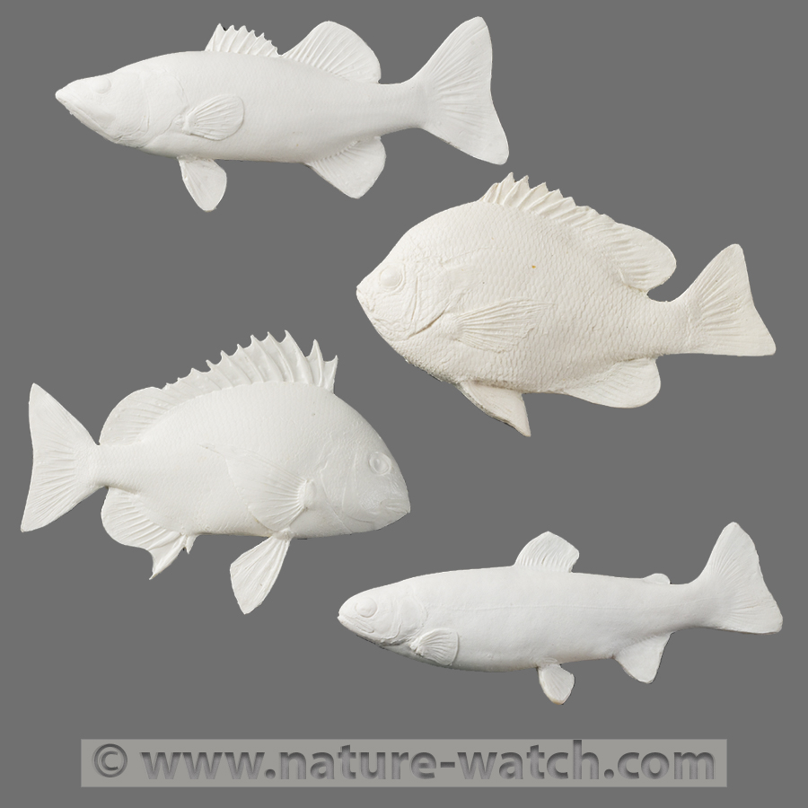 Fish print kits fish paint kit for Fish pictures to print