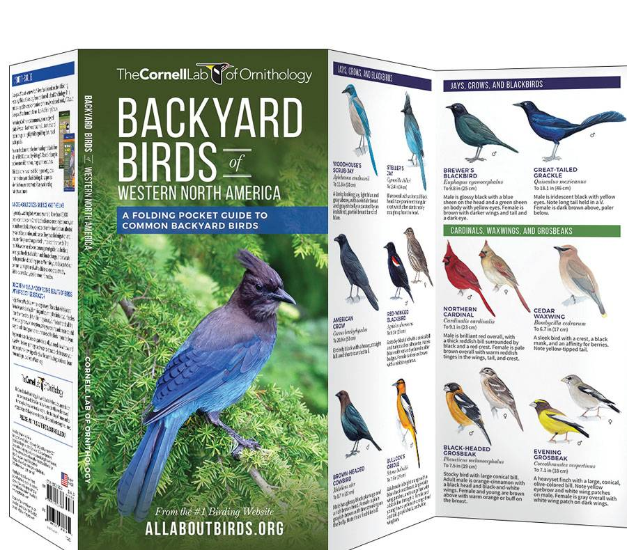 Backyard Birds, Western: Cornell Lab Pocket Guide
