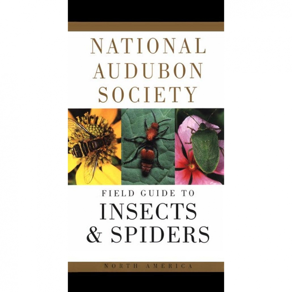 Insects and Spiders: National Audubon Society Field Guide