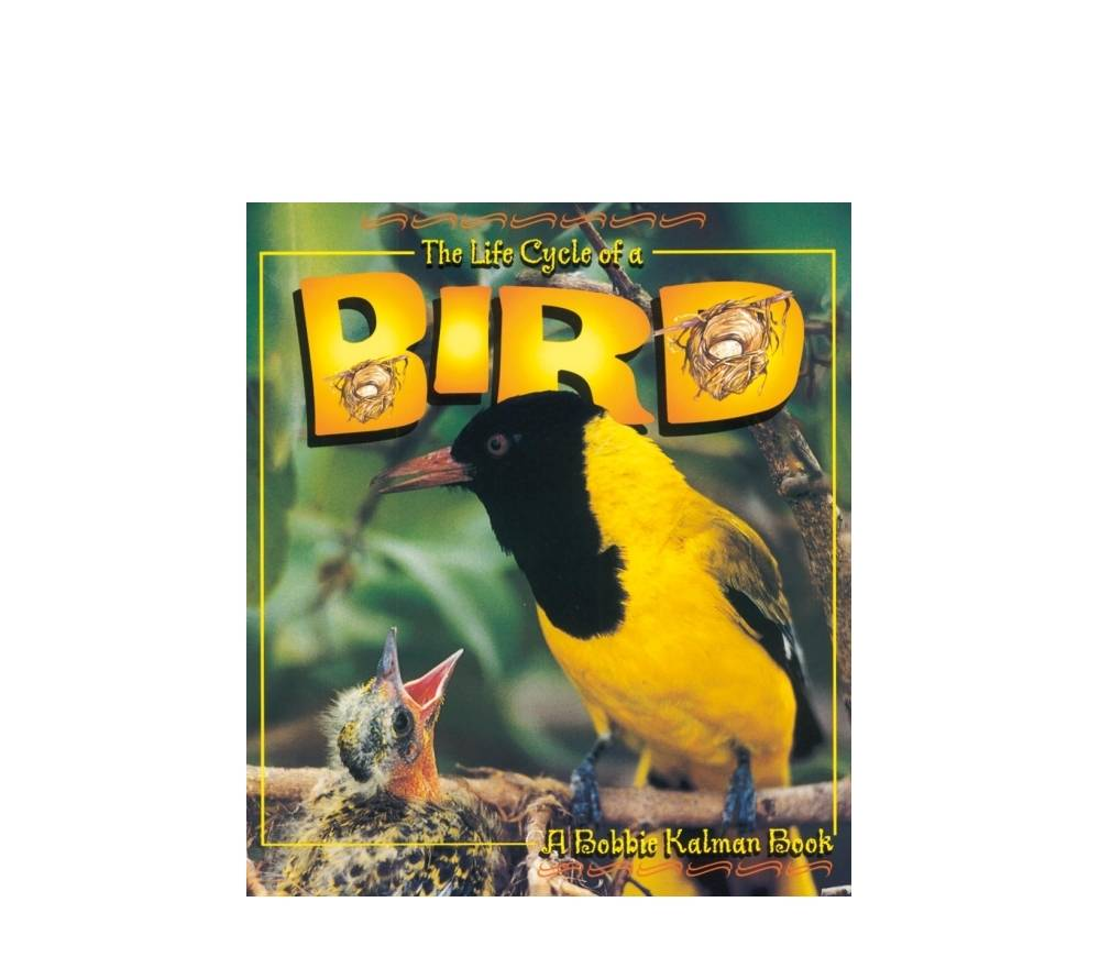 The Life Cycle of a Bird Book