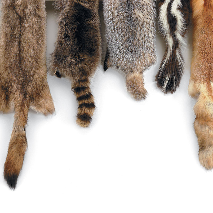 how to clean rabbit fur pelt