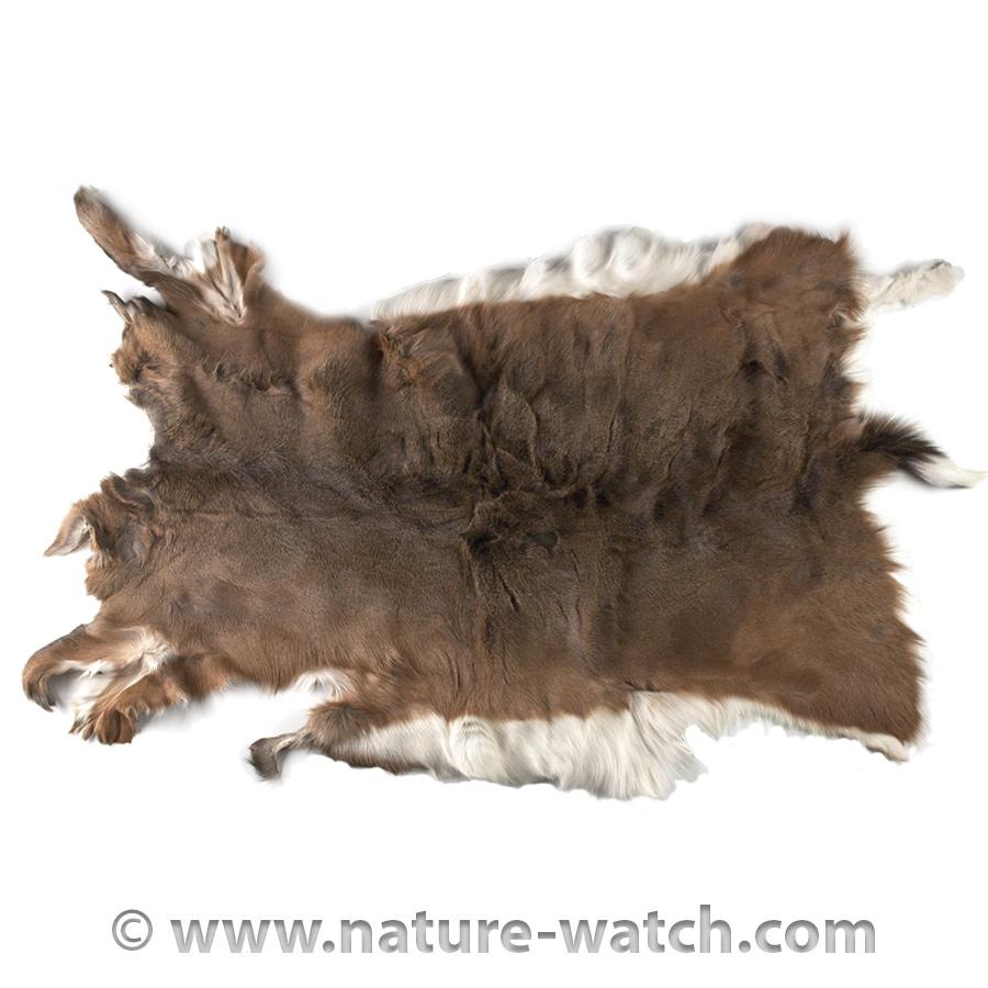 Deer Skin Deer Hides And Pelts Animal Skins