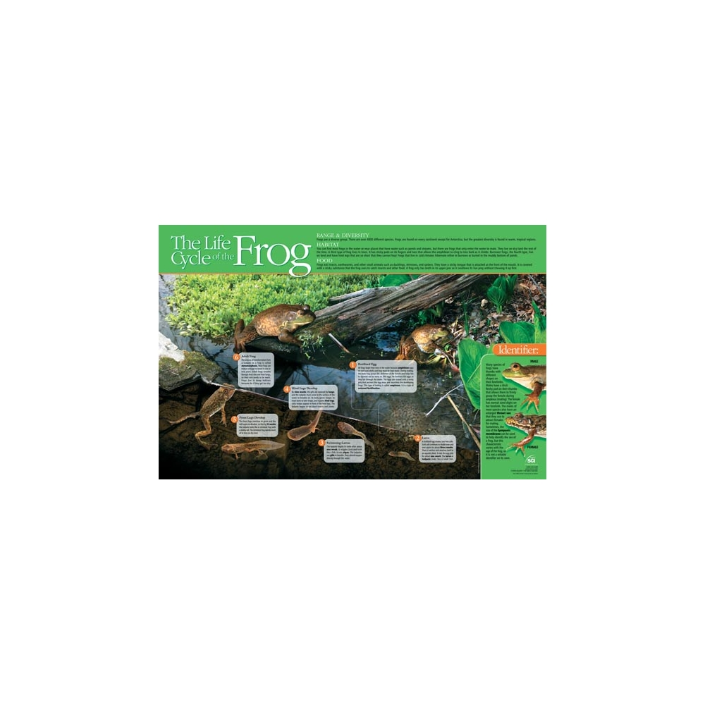 Life Cycle of the Frog Poster