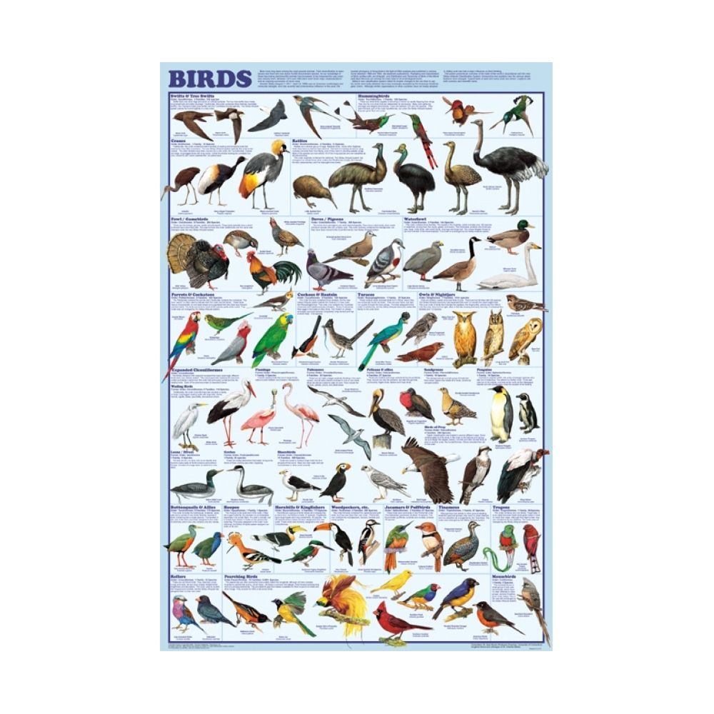 backyard birds of north america poster north american birds poster