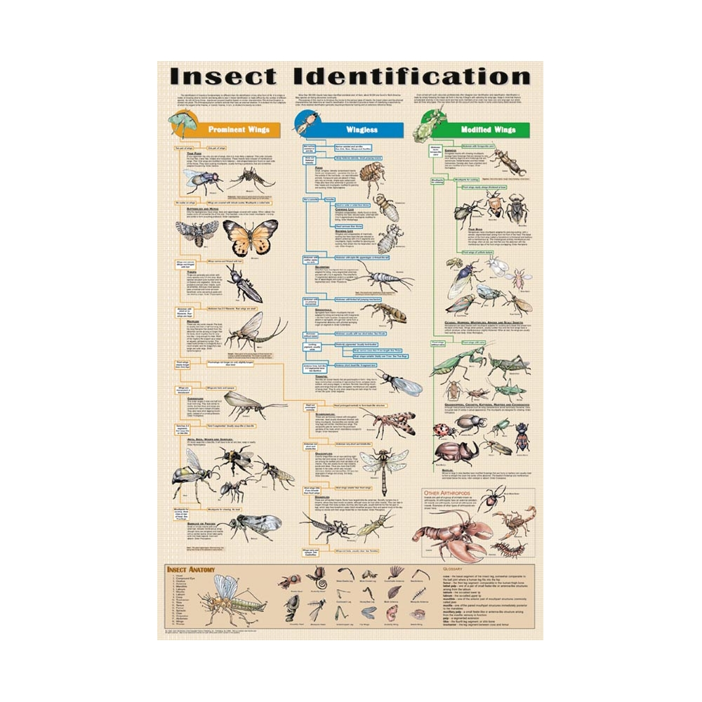 Identification | Dung beetle UK Mapping Project