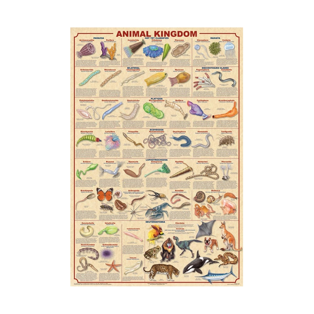 Animal Kingdom Classification Poster