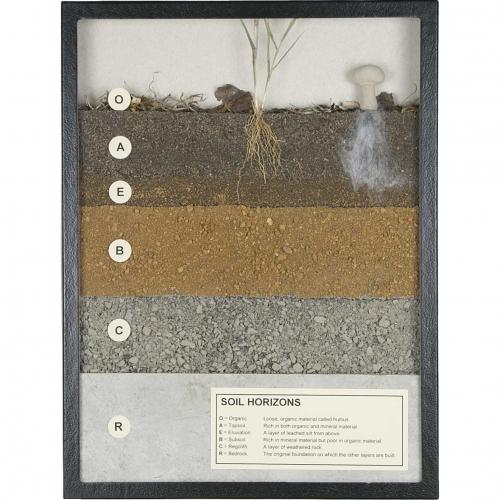Soil horizons display soil layers for Soil horizons layers