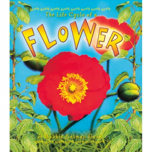 The Life Cycle of a Flower Book - Flower Life Cycle Book