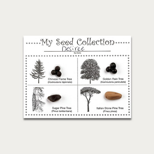 Seeds, Seeds Everywhere Activity Kit