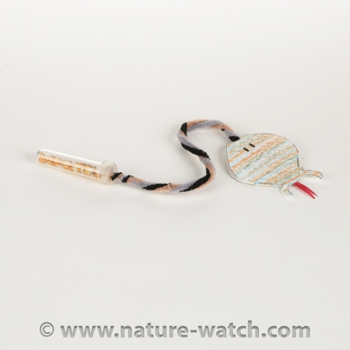 Rattlesnake Activity Kit