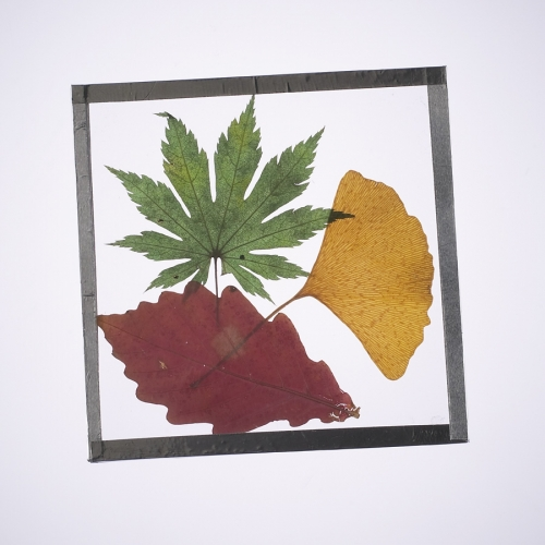 Pressed Leaf Coaster Activity Kit
