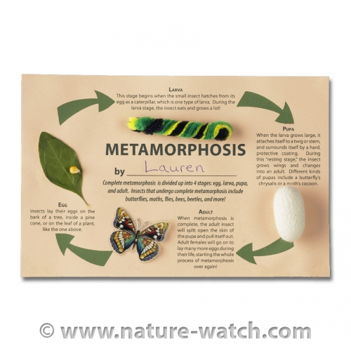 Magnificent Metamorphosis Activity Kit