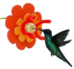 Hummingbird Feeder Activity Kit