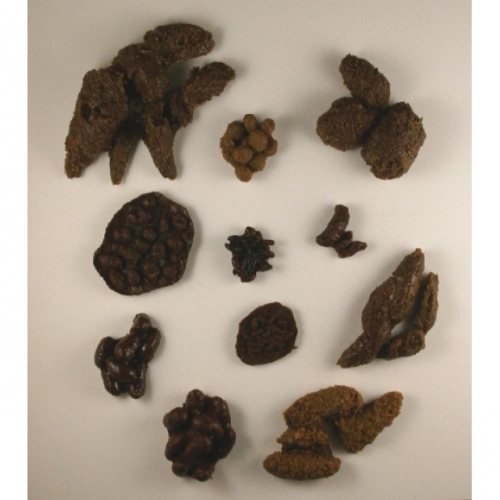 Repliscat� Animal Scat Set (11 Scats)