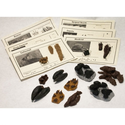 Replica Animal Track and Scat Set (16 Tracks and Scats)