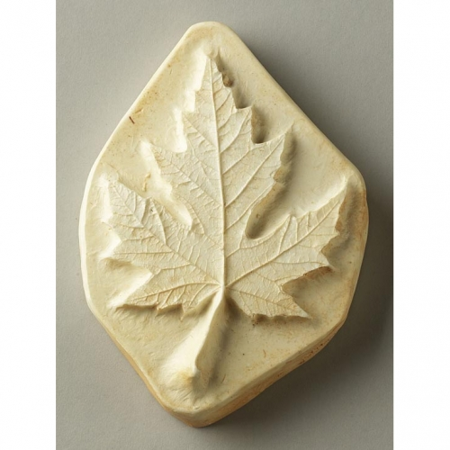 Sugar Maple Leaf Print