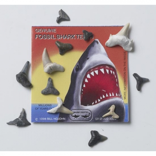 Fossil Shark Teeth Packet