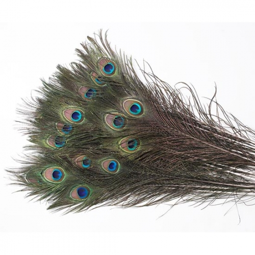 Pack of 10 Peacock Feathers