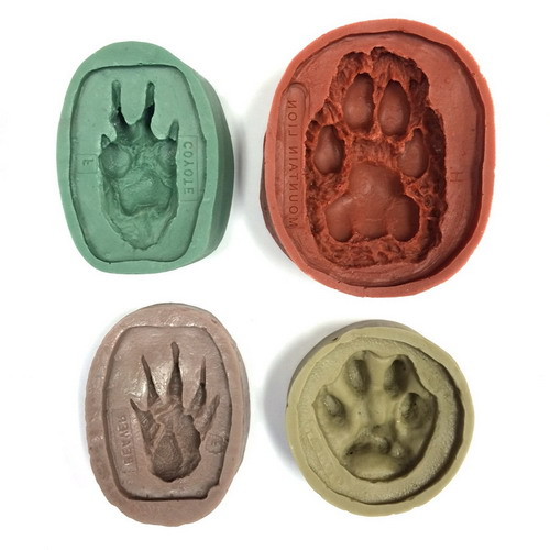 North American Animal Track Molds (Set of 16)