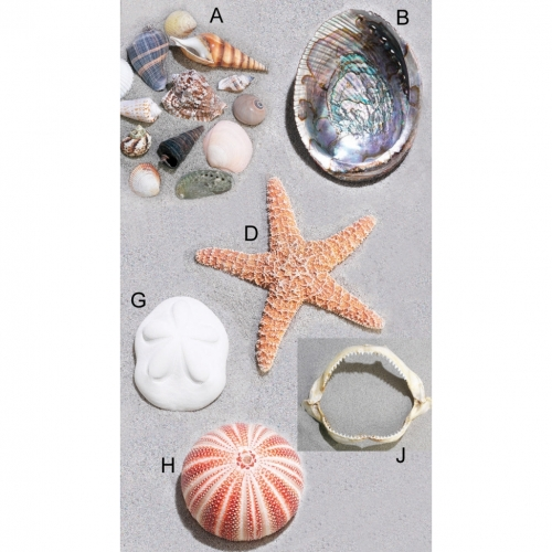 Nature Watch Shells and Sea Life