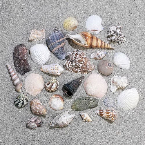 Nature Watch Shell Mix (By the Pound)