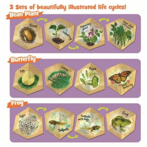 Butterfly, Frog and Plant Life Cycler Set