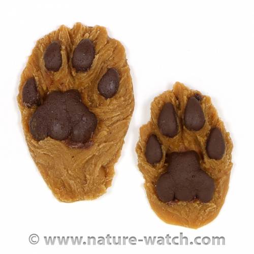 Mountain Lion Track (Cougar): Vinyl Replicas (front & hind)