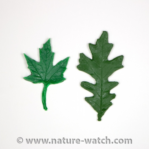 Leaf Replicas of Eastern United States Trees (60 Replicas)