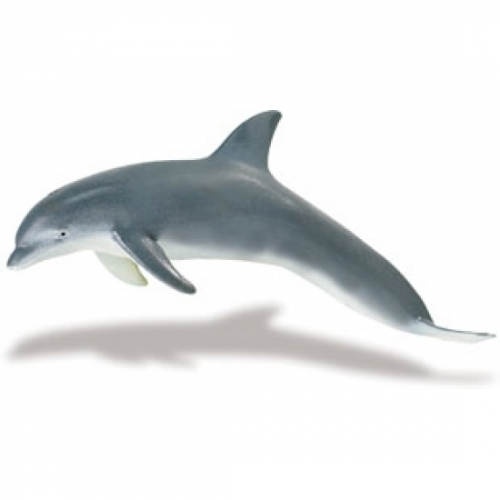Bottlenose Dolphin Replica