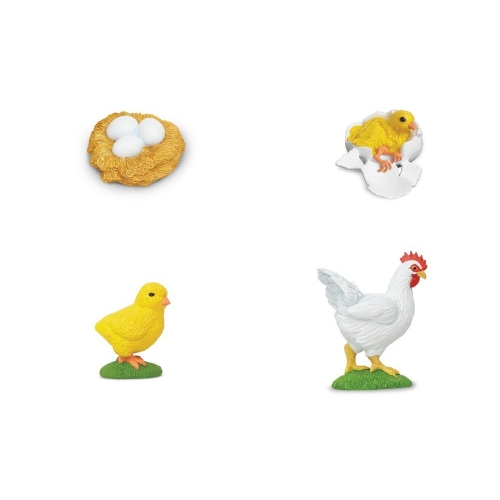 Chicken Life Cycle Stage Figures
