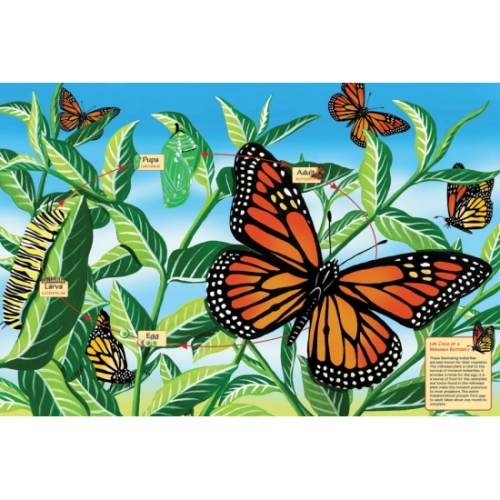 Life Cycle of a Monarch Butterfly Puzzle