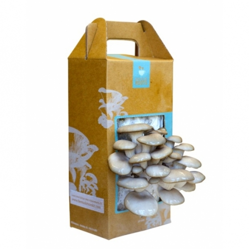Sustainable Mushroom Garden Kit