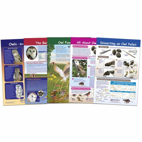 Owl and Owl Pellet Bulletin Board Chart Set