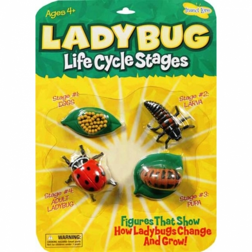 Ladybug Life Cycle Stage Figures