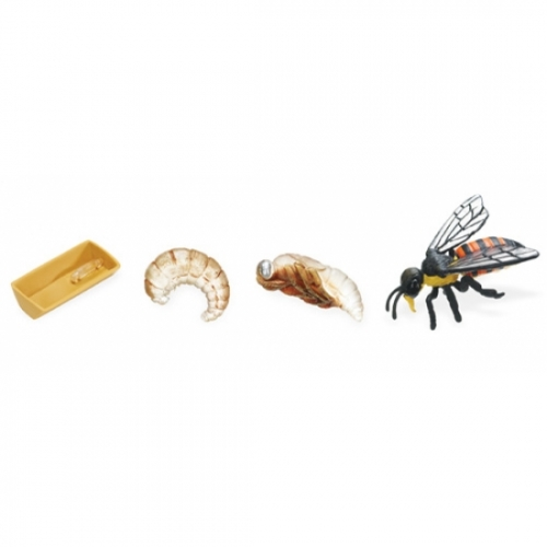 Honey Bee Life Cycle Stage Figures