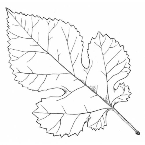 Mulberry Leaf Rubber Stamp
