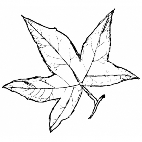 Sycamore Leaf Rubber Stamp