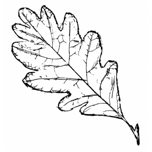 White Oak Leaf Rubber Stamp