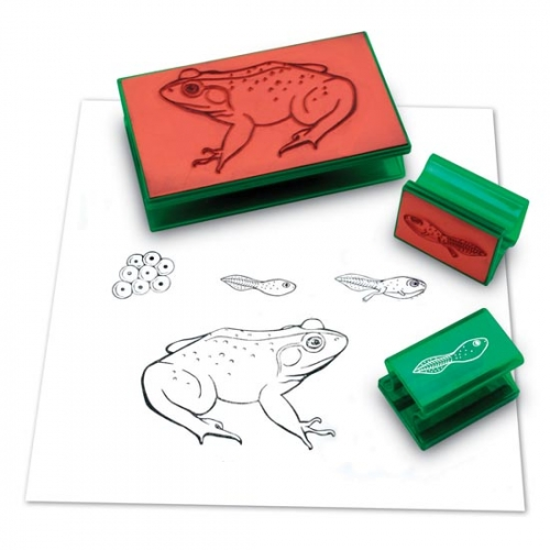 Frog Life Cycle Stamp Set