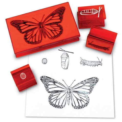 Butterfly Life Cycle Stamp Set
