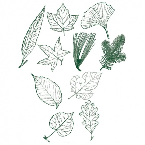 Leaf Rubber Stamps (set of 10)