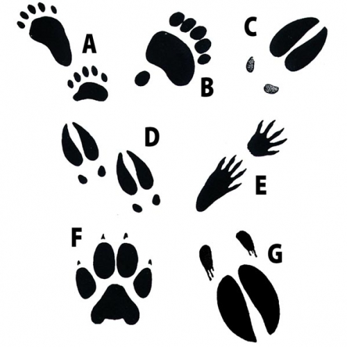 Animal Track Rubber Stamps (set of 7)