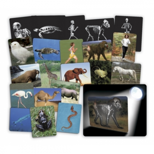 What's Inside Animals Cards