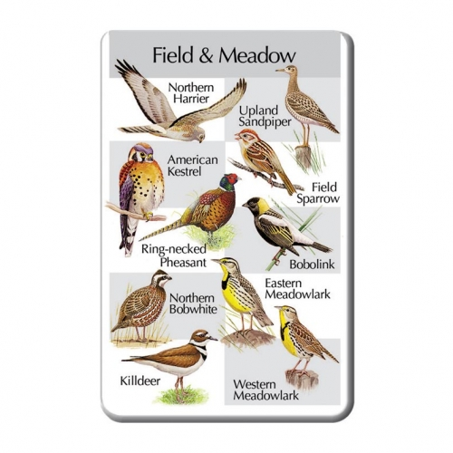 Birds of the Meadows SongCard